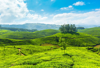 Munnar and Houseboat Tour Package 11